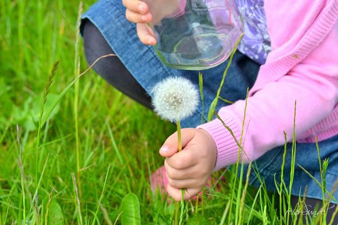 Pusteblumen Make a wish - Pusteblumen im Glas Blumen Pflücken