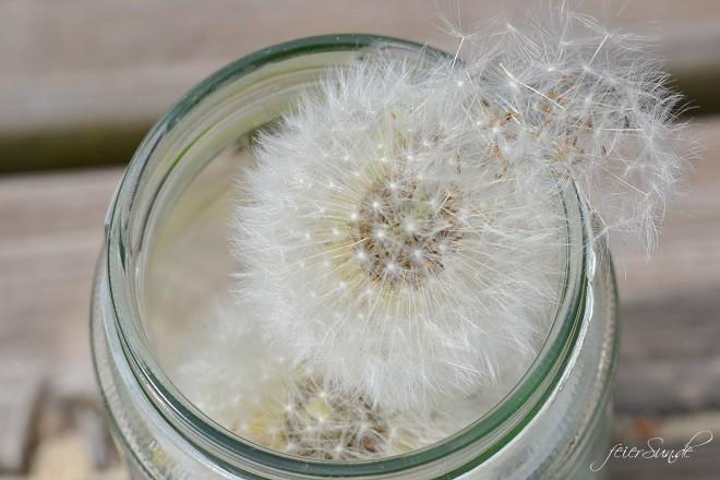 Pusteblumen Make a wish - Pusteblumen im Glas Make a Wish - ich schenkt Euch einen Wunsch