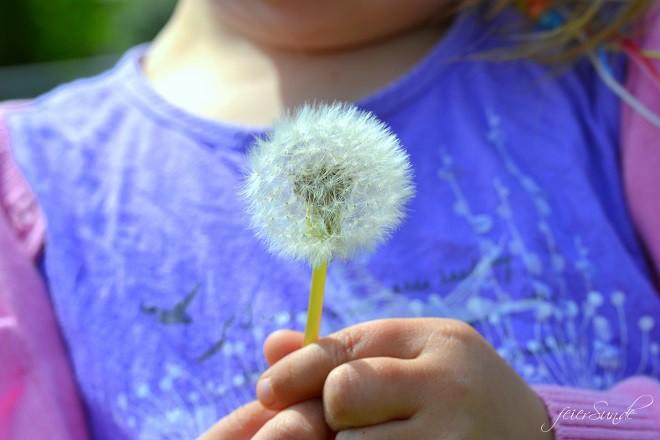 Pusteblumen Make a wish - Pusteblumen im Glas Pusteblumen haben Magie
