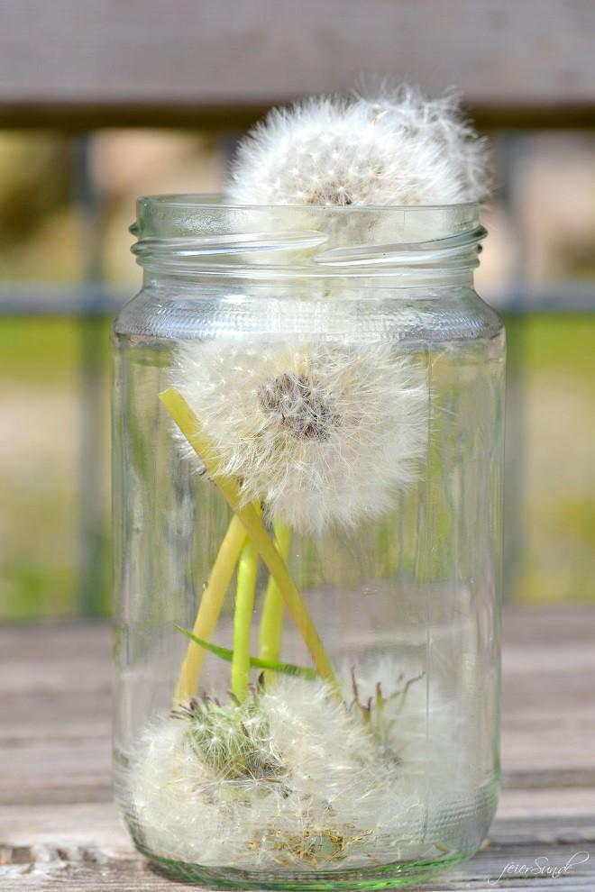 Pusteblumen Make a wish - Pusteblumen im Glas - Wenn wir wuenschen können wir beschenkt werden