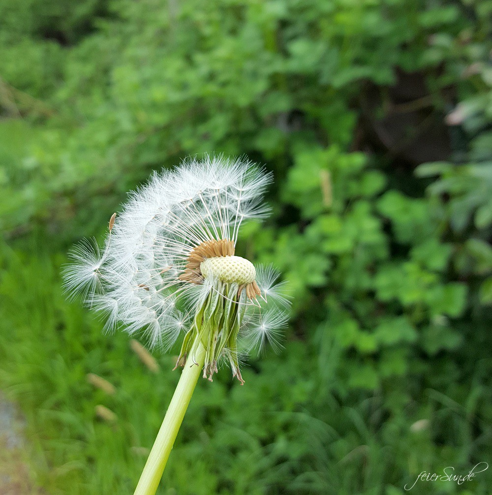 Wunsch für Mama - Give a wish - take a wish