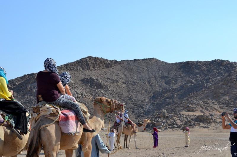 urlaub-im-paradies unser achtunddreissigstes wochenende 2016 _sa_kamel-reiten