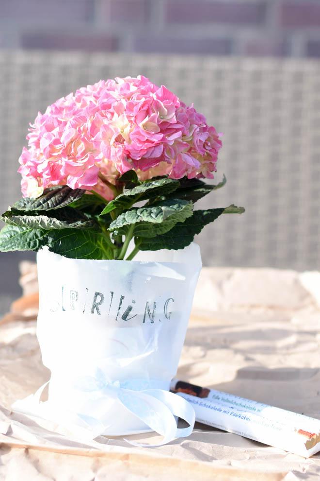 Hello-Spring_ein-Fruehlingsgruß-zum-verschenken-1593